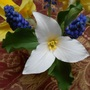 Trillium grandiflorum in the vase