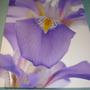 Iris print on canvas