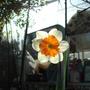 Sunshine_012