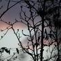 madgical sky