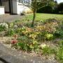 April_garden_2013_002