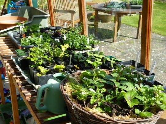 Productive greenhouse!