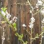 Almond trees.