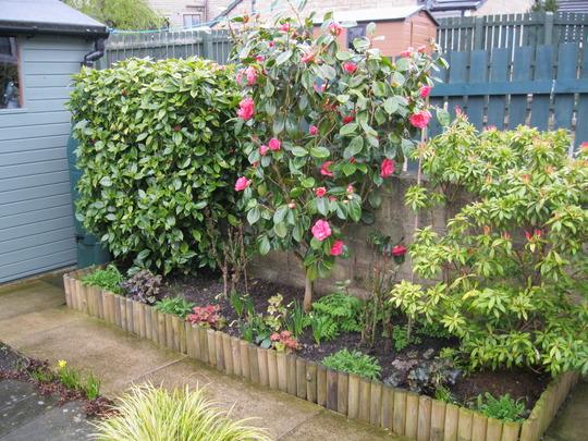 Camellia...