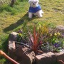 central bedding of spring flower display with pet dog