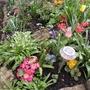 A Few Spring Plants