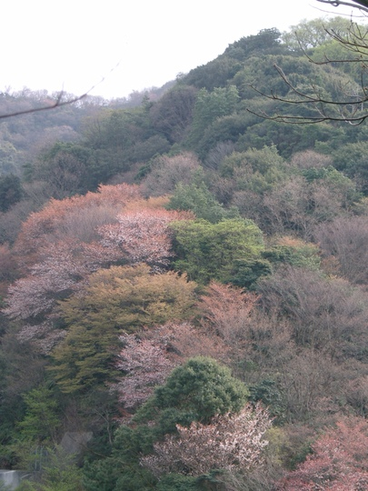 View from Osaka's chopped down mountain