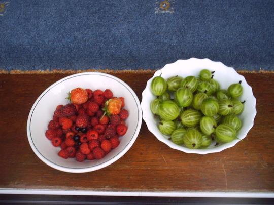 fruit_picked_today.jpg