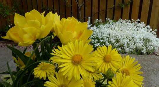 Springtime at last!