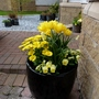 Black pot with yellow planting