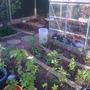 Spring 2013, new crop