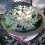 Spring_2013 (Oenothera caespitosa (Tufted Primrose))
