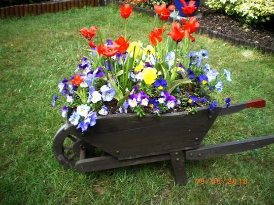 Garden Wheelbarrow full of Spring flowers