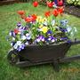 Garden Wheelbarrow full of Spring flowers