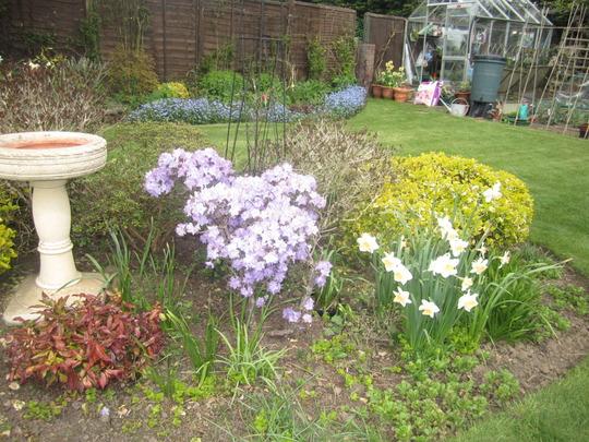 Azalea and garden