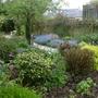 Garden Mid May 2013 013