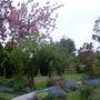 Garden Mid May 2013 004