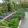 Garden Mid May 2013 006