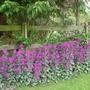 Garden Mid May 2013 010
