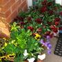 latest garden 2013 049