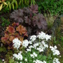 Heucheras, arabis, dwarf bamboo and baby stipa tenuissima (heuchera)