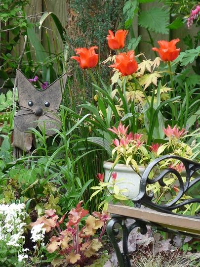Spring corner (tulipa)