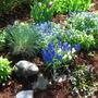 Small Entrance Garden- Farmington CT