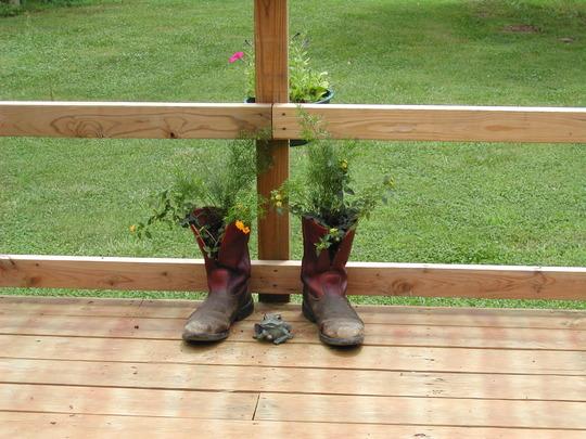 boots (Lantana camara)