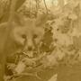Fox cub..