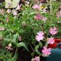 wild flower basket 010