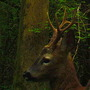 Red deer last night