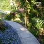 Garden Mid May 2013 027