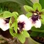 zigo_orchid.jpg