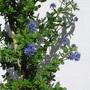 Cimg9545puget_blue