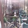 My sunny greenhouse pond