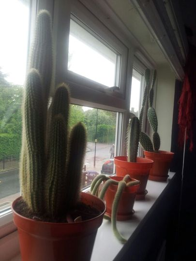 my larger cacti