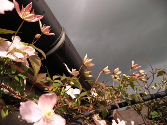 montana marg under a dark sky