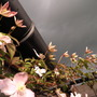 30_may_2013_012