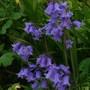 June_garden_001
