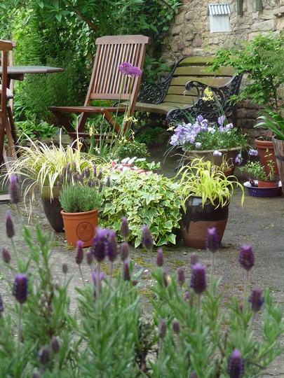 Garden pots (Lavender stoechas)