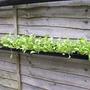 Salad gutters