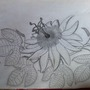 My first Sketch in about 2 years (Passiflora coccinea (Red Granadilla))