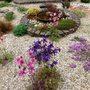 Gravel_garden