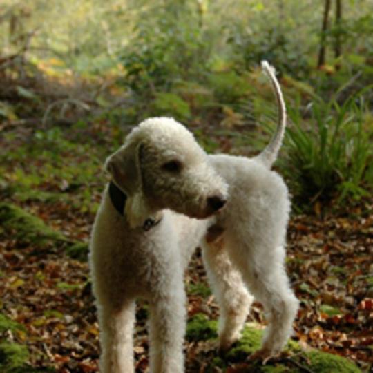 Larrydog