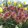 Photo taken in Tresco gardens.