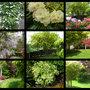 G877_roger_s_garden_montage_