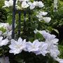 More_garden_006