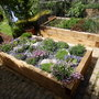 Rockery  bed and veg bed