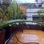 Rain drenched balcony garden... the grounds are even worse...!!