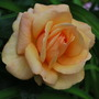 Rosa Engelsgesicht.